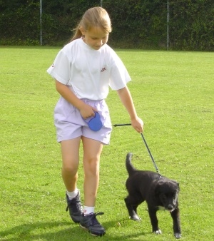 Young Charlie training a puppy
