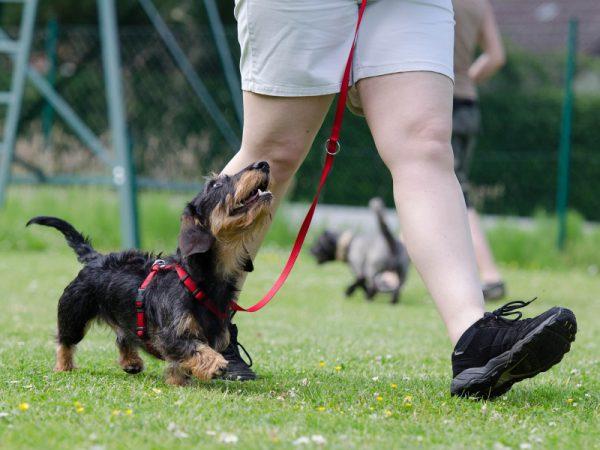 Adult Dog Classes from Woof n Hoof